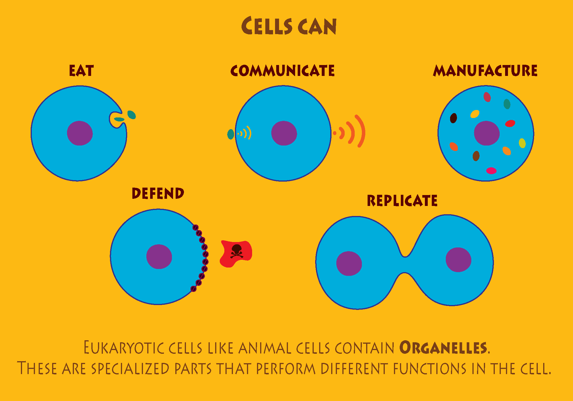 What Cells can do